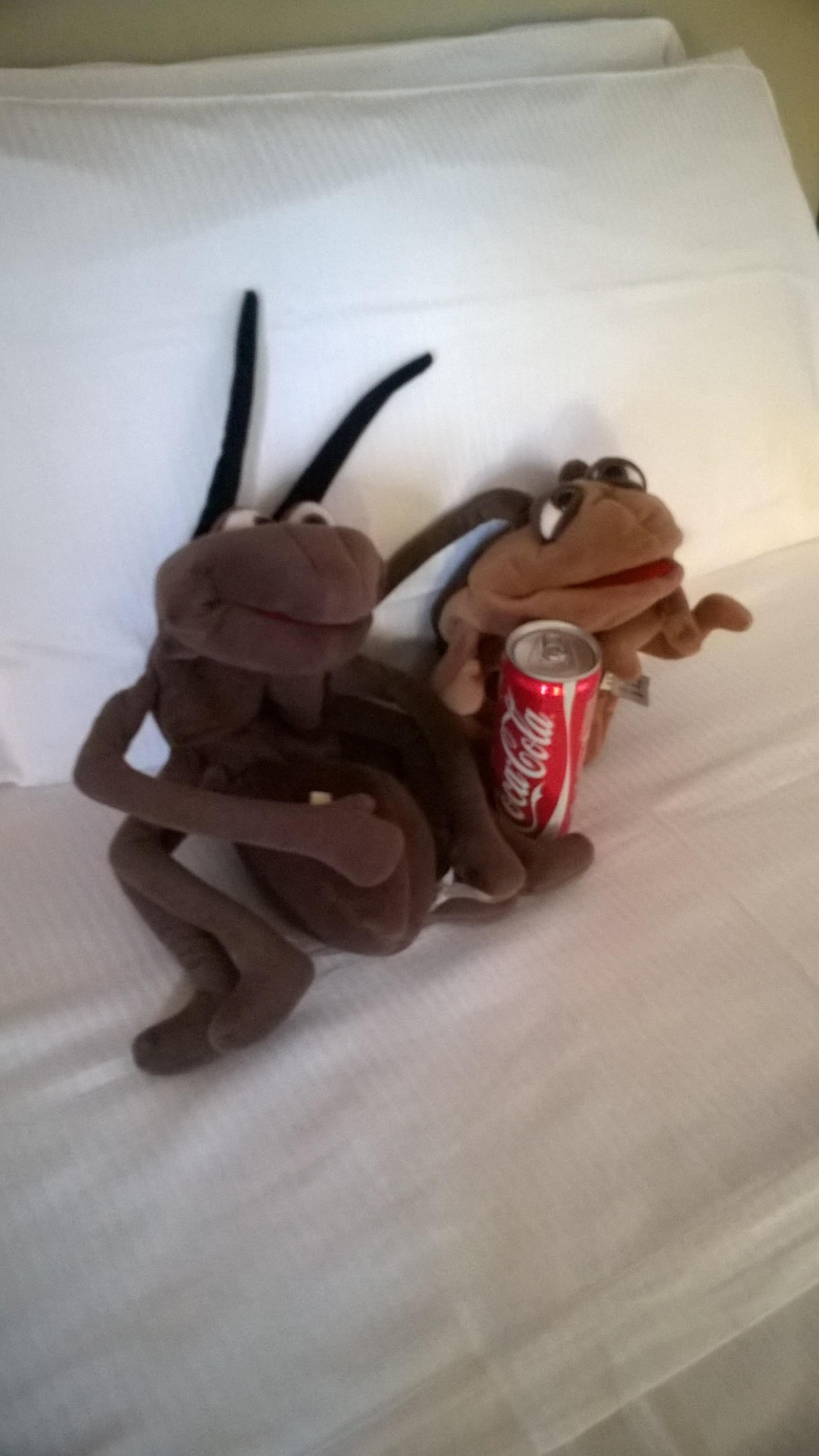 Juhuu, Cola in der Minibar - bleibt nicht lang da, wo sie mal war...
