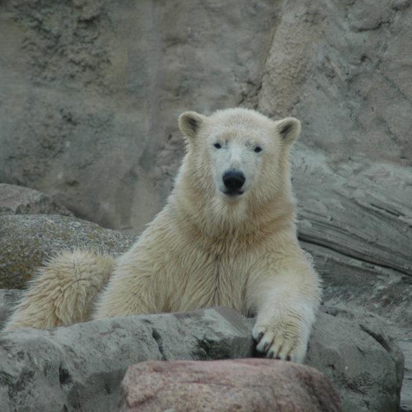 Zoo am Meer 2014