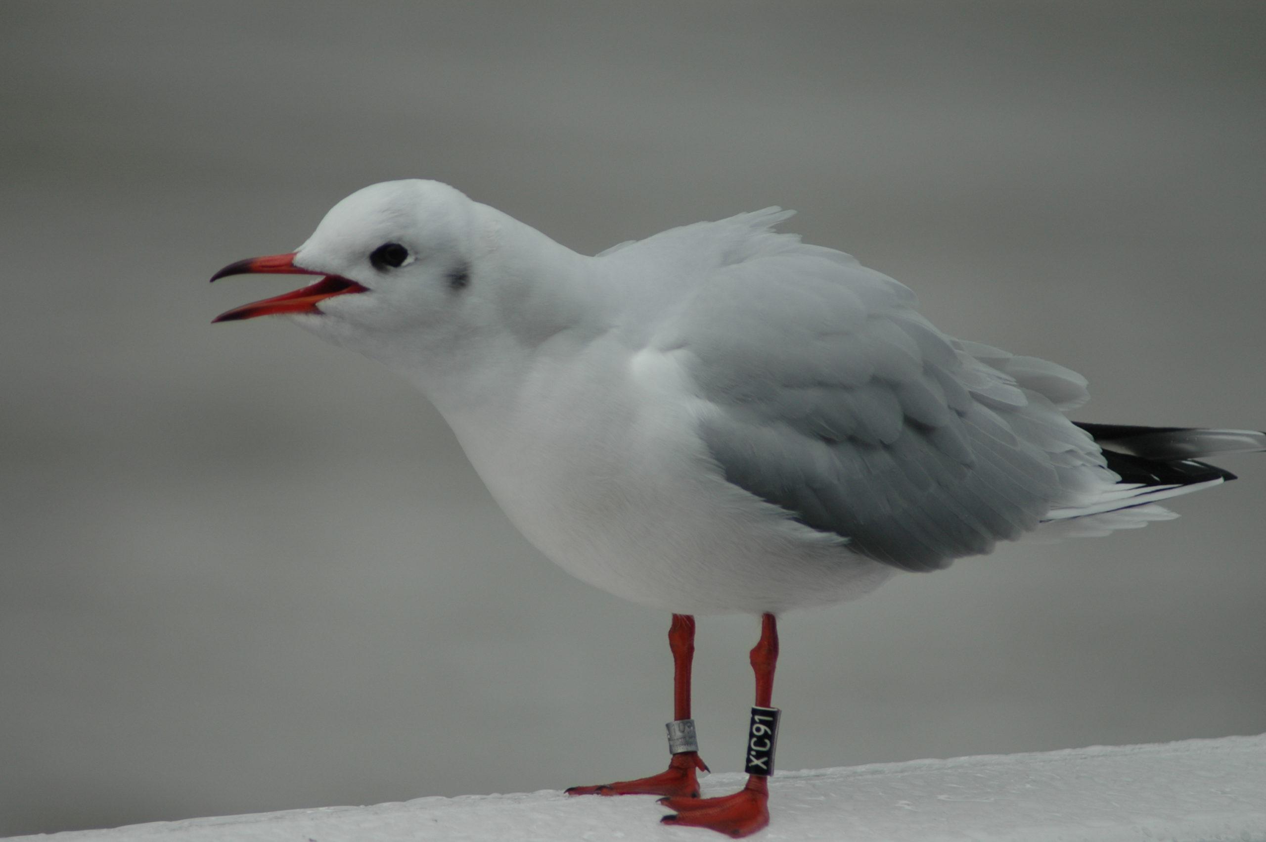 Cuxhaven 2013