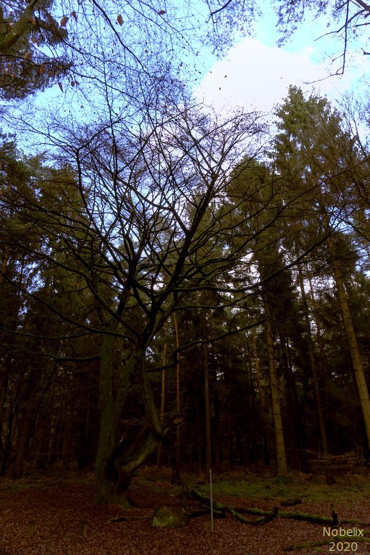 Ein Baum ohne Blätter